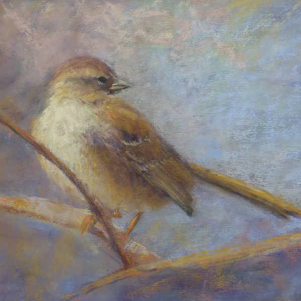 """Bird on a Perch"" 8x10 Pastel © Nelia Harper"