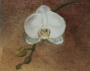 Orchid Study, 4.5x5.5, oil on linen panel. Reflections of You, 16x20. oil on linen panel, River's Song, 11x14 oil on linen panel, © Nelia Harper