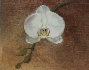 Orchid Study, 4.5x5.5, oil on linen panel. Reflections of You, 16x20. oil on linen panel, River's Song, 11x14 oil on linen panel, © Nelia Harper
