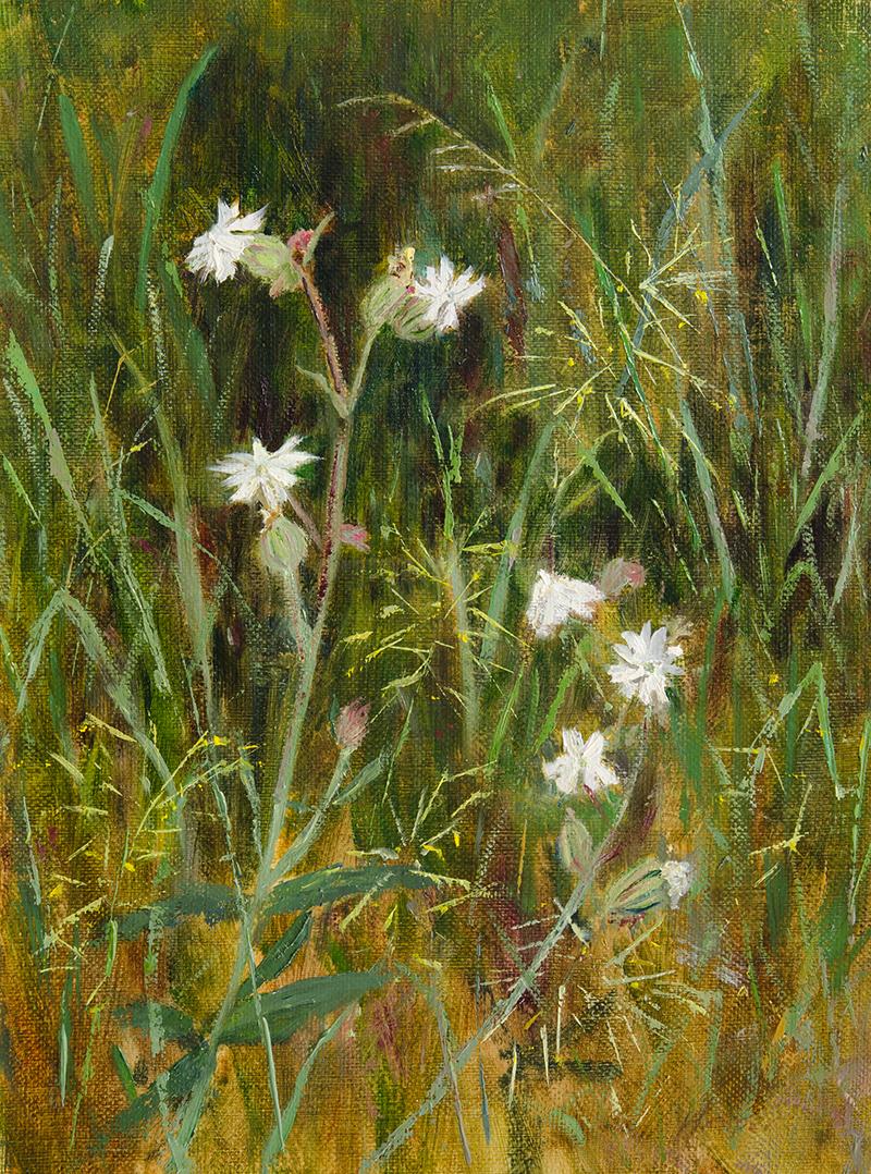 White Campion, 12x9, oil on canvas panel © Nelia Harper